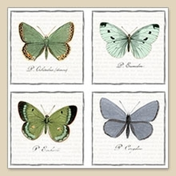 Sagen V - Big butterflies (445)