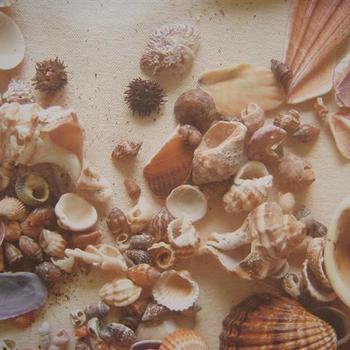 Rayher FES zeeschelpen