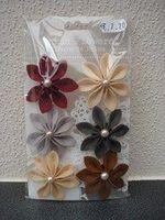 PM Flowers - Kalanchoe mahogany