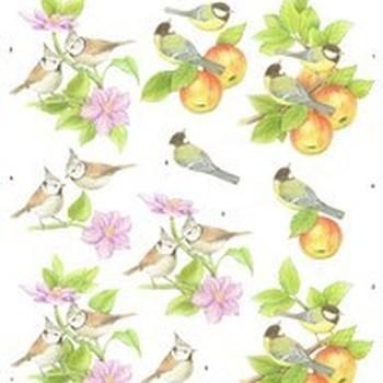 MM vogels