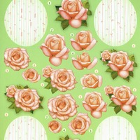 Rozen roze - knipvel